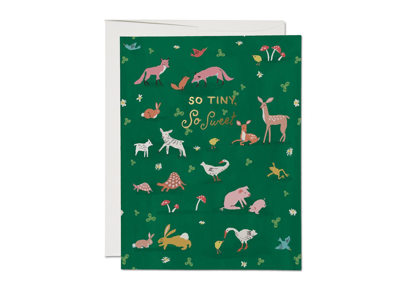 krl1769-tiny-animals